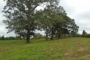 The Davenport Recreational/Hunting  Farm in Crenshaw, AL (15 of 64)