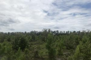 10 Acres Cape Fear River in Bladen, NC (7 of 15)
