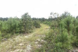 10 Acres Cape Fear River in Bladen, NC (9 of 15)