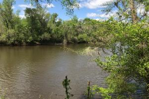 10 Acres Cape Fear River in Bladen, NC (5 of 15)
