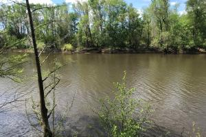 10 Acres Cape Fear River in Bladen, NC (10 of 15)