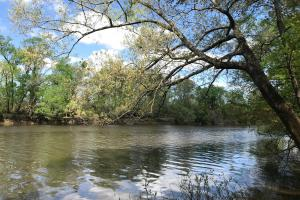 10 Acres Cape Fear River in Bladen, NC (3 of 15)