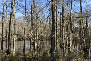 Pearl River Retreat Lot 22 in Lawrence, MS (5 of 6)