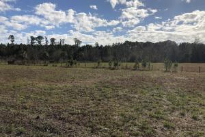 St. Helena Island Open Farm / Pasture Land in Beaufort, SC (3 of 37)