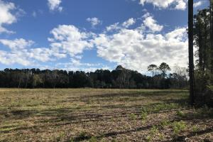 St. Helena Island Open Farm / Pasture Land in Beaufort, SC (15 of 37)