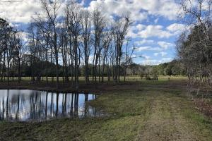 St. Helena Island Open Farm / Pasture Land in Beaufort, SC (7 of 37)
