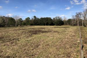 St. Helena Island Open Farm / Pasture Land in Beaufort, SC (18 of 37)