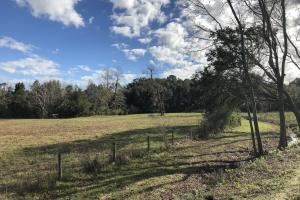 St. Helena Island Open Farm / Pasture Land in Beaufort, SC (27 of 37)