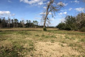 St. Helena Island Open Farm / Pasture Land in Beaufort, SC (35 of 37)