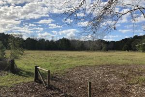 St. Helena Island Open Farm / Pasture Land in Beaufort, SC (9 of 37)