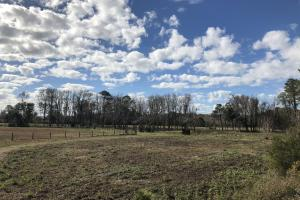 St. Helena Island Open Farm / Pasture Land in Beaufort, SC (5 of 37)