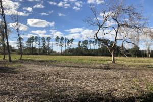 St. Helena Island Open Farm / Pasture Land in Beaufort, SC (32 of 37)