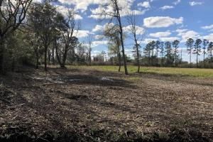 St. Helena Island Open Farm / Pasture Land in Beaufort, SC (33 of 37)