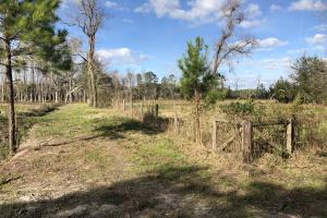 St. Helena Island Open Farm / Pasture Land in Beaufort, SC (34 of 37)