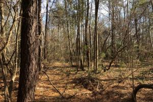 Evergreen Homesite in Conecuh, AL (3 of 8)