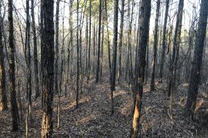 Yalobusha County Young Timber Investment - Yalobusha County MS