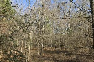 Anderson Land and Homesite in Anderson, SC (5 of 9)