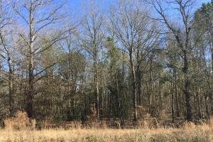 Eastover Homesite with Stream in Richland, SC (11 of 13)