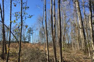 Eastover Homesite with Stream in Richland, SC (2 of 13)