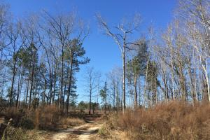Eastover Homesite with Stream in Richland, SC (5 of 13)