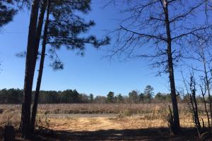 Eastover Homesite with Stream in Richland, SC (6 of 13)