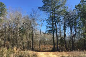 Eastover Homesite with Stream in Richland, SC (7 of 13)