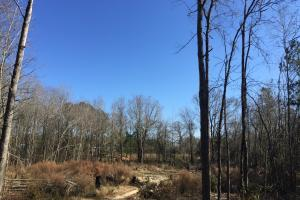 Eastover Homesite with Stream in Richland, SC (12 of 13)