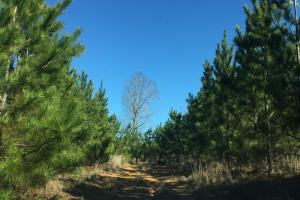 Camden Recreational Tract and Long-Term Timber Investment in Kershaw, SC (31 of 50)