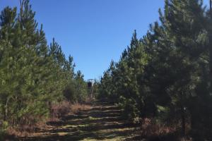 Camden Recreational Tract and Long-Term Timber Investment in Kershaw, SC (18 of 50)
