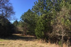 Camden Recreational Tract and Long-Term Timber Investment in Kershaw, SC (36 of 50)