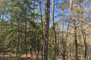 Camden Recreational Tract and Long-Term Timber Investment in Kershaw, SC (10 of 50)