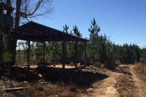 Camden Recreational Tract and Long-Term Timber Investment in Kershaw, SC (24 of 50)