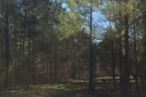 Camden Recreational Tract and Long-Term Timber Investment in Kershaw, SC (8 of 50)