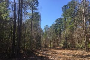 Camden Recreational Tract and Long-Term Timber Investment in Kershaw, SC (26 of 50)