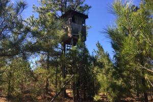 Camden Recreational Tract and Long-Term Timber Investment in Kershaw, SC (41 of 50)
