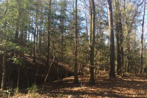 Camden Recreational Tract and Long-Term Timber Investment in Kershaw, SC (21 of 50)