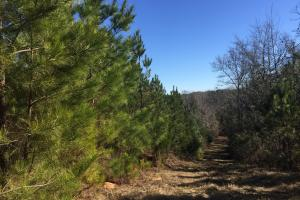 Camden Recreational Tract and Long-Term Timber Investment in Kershaw, SC (22 of 50)
