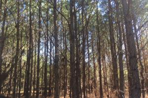 Camden Recreational Tract and Long-Term Timber Investment in Kershaw, SC (50 of 50)