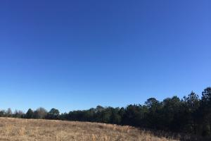 Camden Recreational Tract and Long-Term Timber Investment in Kershaw, SC (3 of 50)