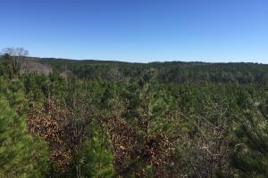 Camden Recreational Tract and Long-Term Timber Investment in Kershaw, SC (30 of 50)
