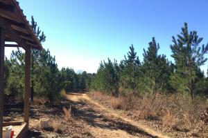 Camden Recreational Tract and Long-Term Timber Investment in Kershaw, SC (5 of 50)