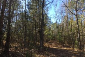 Camden Recreational Tract and Long-Term Timber Investment in Kershaw, SC (13 of 50)