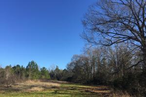 Camden Recreational Tract and Long-Term Timber Investment in Kershaw, SC (34 of 50)