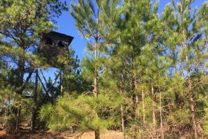 Camden Recreational Tract and Long-Term Timber Investment in Kershaw, SC (17 of 50)