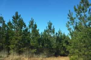 Camden Recreational Tract and Long-Term Timber Investment in Kershaw, SC (20 of 50)
