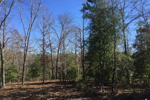 Camden Recreational Tract and Long-Term Timber Investment in Kershaw, SC (14 of 50)