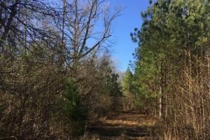 Camden Recreational Tract and Long-Term Timber Investment in Kershaw, SC (49 of 50)