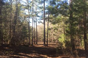 Camden Recreational Tract and Long-Term Timber Investment in Kershaw, SC (32 of 50)