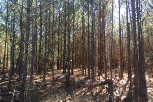 Camden Recreational Tract and Long-Term Timber Investment in Kershaw, SC (39 of 50)