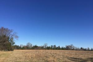 Camden Recreational Tract and Long-Term Timber Investment in Kershaw, SC (4 of 50)